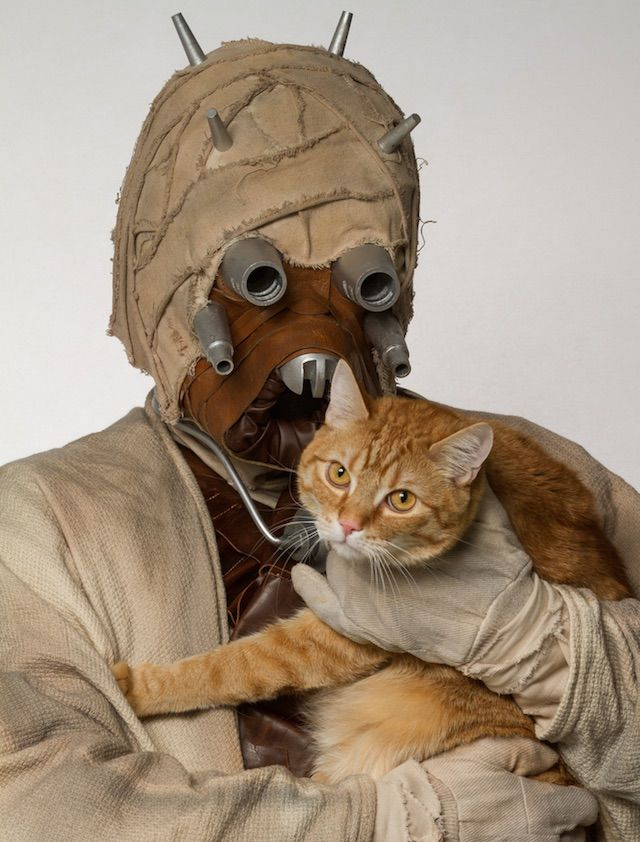 Star Wars Photo Shoot To Find Homes For Shelter Animals Funny