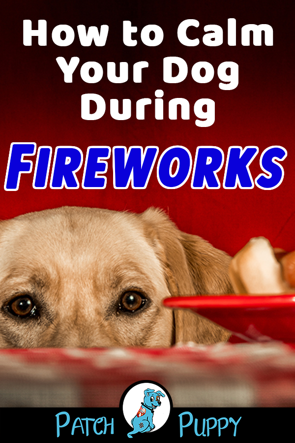 How To Calm Your Dog During Fireworks And The 1 Thing Guaranteed