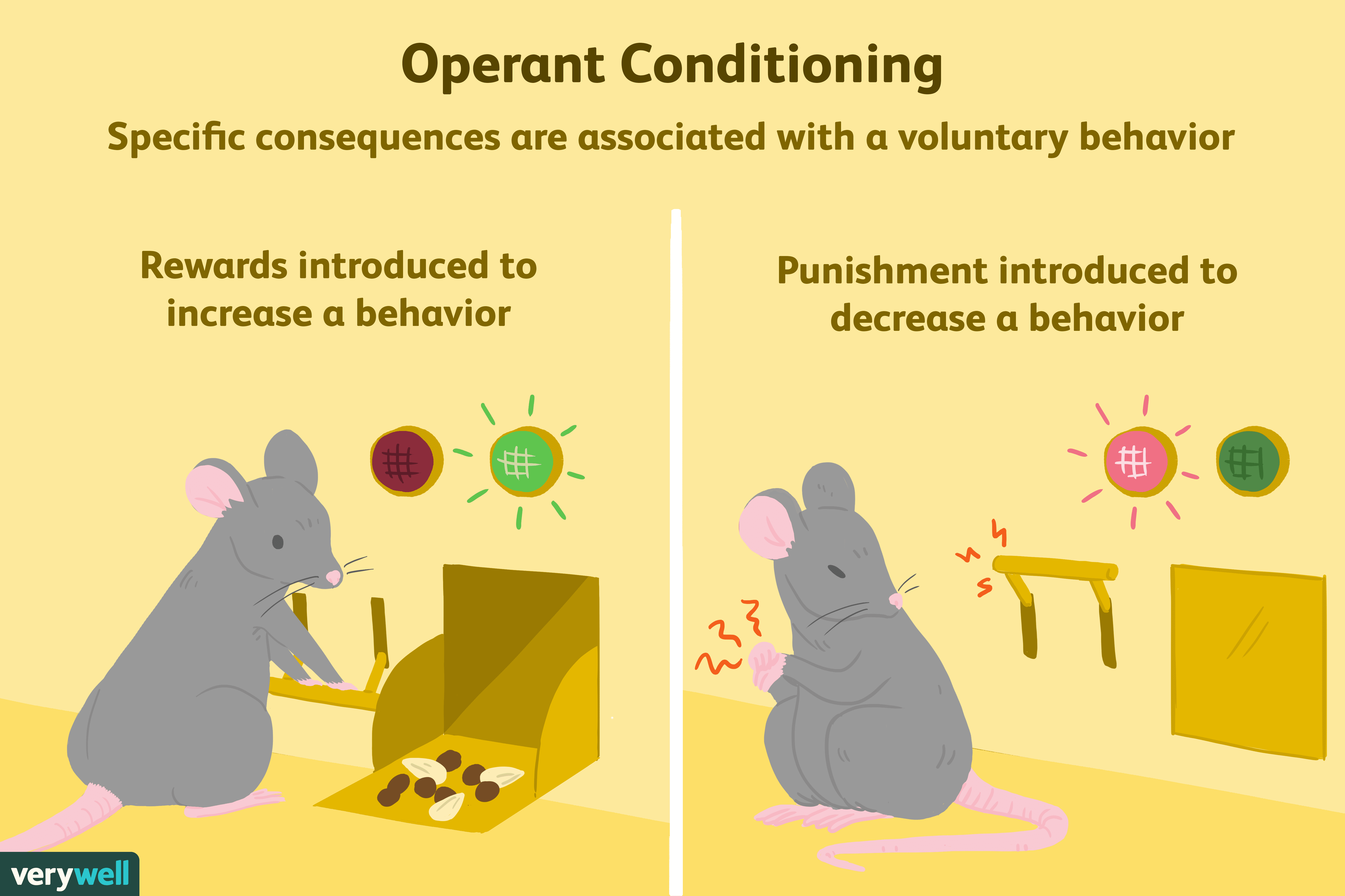 Operant Conditioning Examples Biology