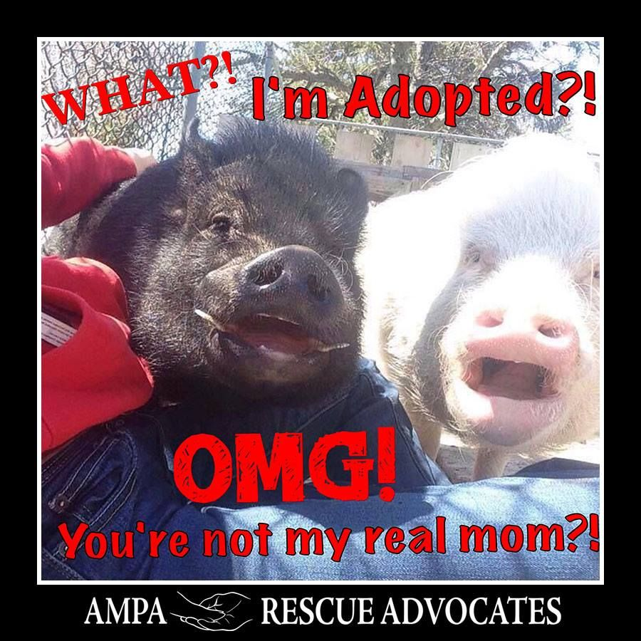 "Ut-oh... the cat's outta the bag now!  ""Like"" and share the AMPA Rescue Advocates page to help us advocate for those without a voice!  Thank you Liz Barnes for the photo!"