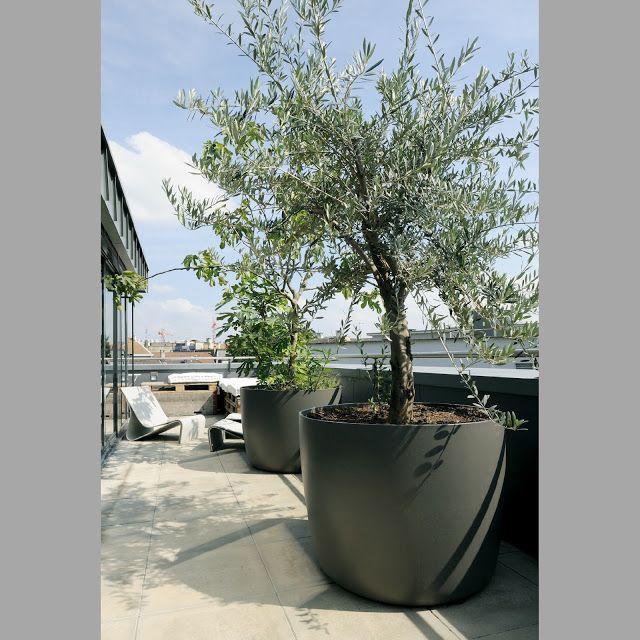 Olivo en maxicontenedor para terraza ideas para tu - Arboles decorativos jardin ...