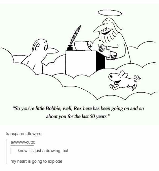 I Firmly Believe That God Allows Animals Into Heaven Since He Created Them Glauben An Die Menschheit Wiederhergestellt Niedlich Tiere