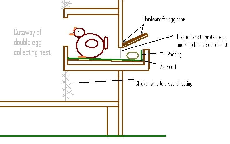 How To Get Chickens To Lay Eggs In Nesting Boxes