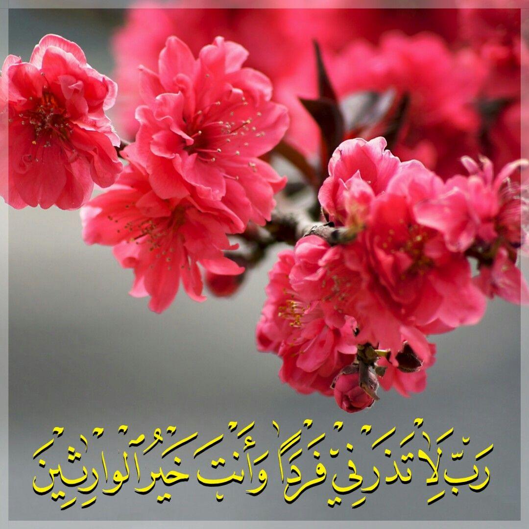 قرآن كريم آيه رب لا تذرني فردا وانت خير الوارثين بلغوا