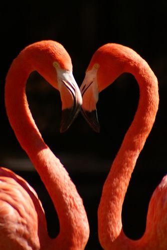 Love is Love <3