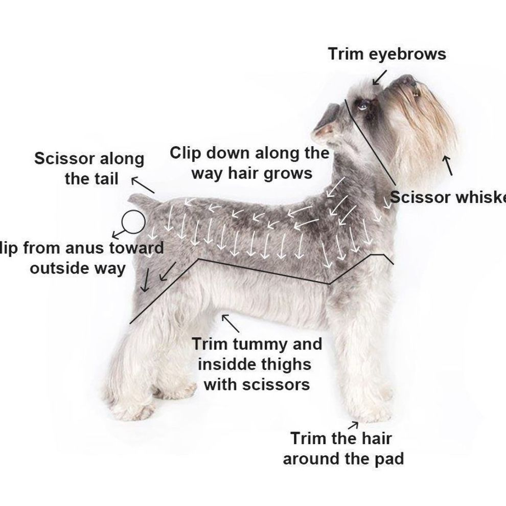 Pet Clippers Yihong Professional Cordless Electric Dog Clippers Rechargeable Dog Hair Clippers Low Noise Dog Grooming Clippers Schnauzer Grooming Dog Grooming
