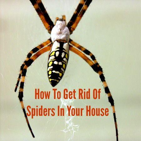 ecf4108e96e2157401e678344d5c3171 - How To Get Rid Of Spiders From Your Car
