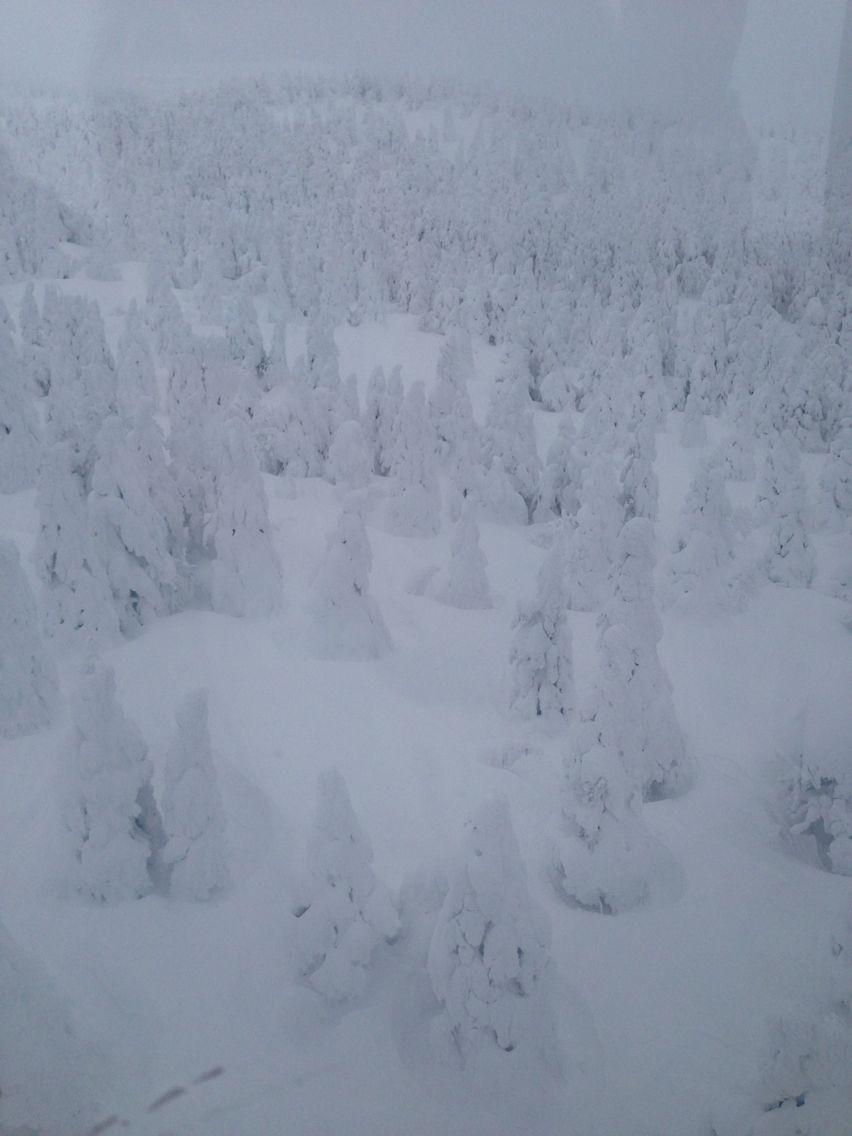 樹氷、山形蔵王スキー場 Giant Monsters in Yamagata Zao ski,Japan 樹氷
