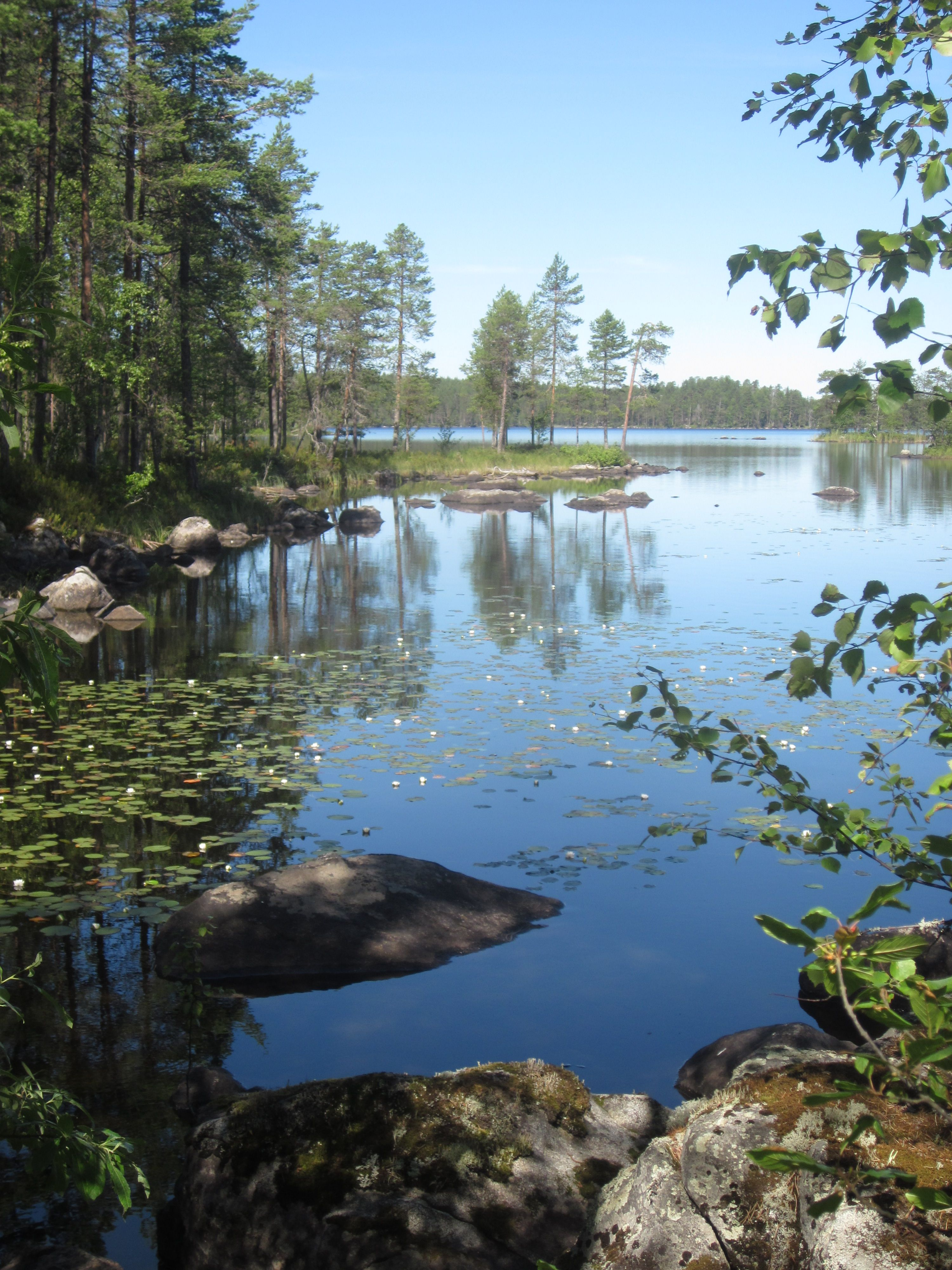 lovely summer moment in Salamajärvi National Park in Kivijärvi #Kivijaervi #Salamajaervinationalpark #summer
