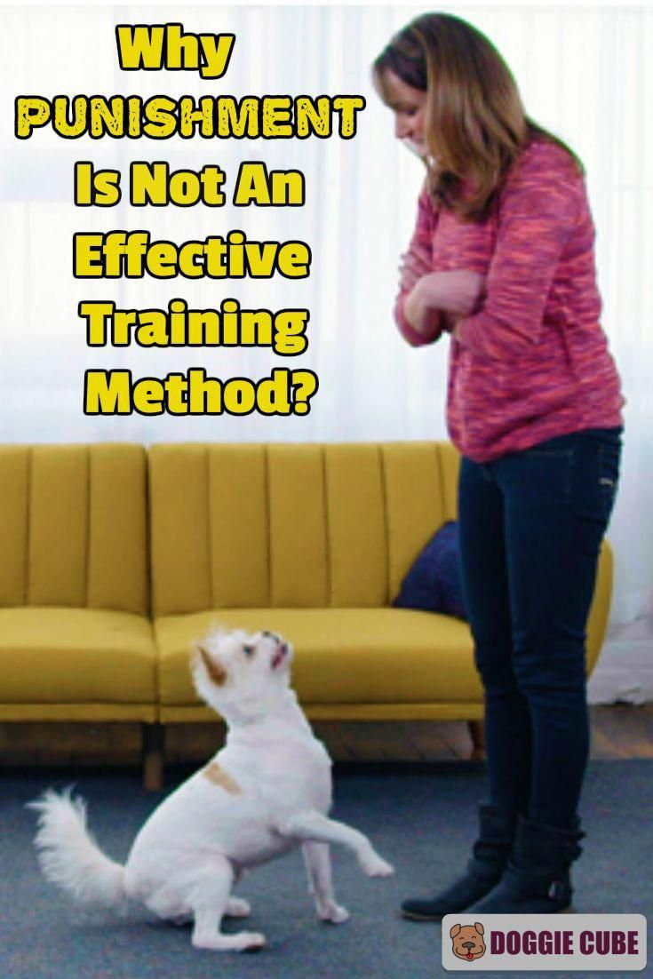 Potty training sometimes called house training is among