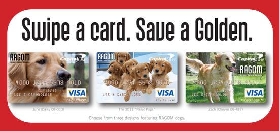 Ragom Capital One Credit Card Money Supports Golden Rescue