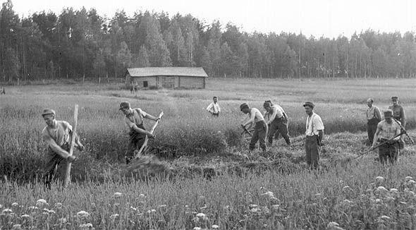 Sotilaat auttavat viljankorjuussa