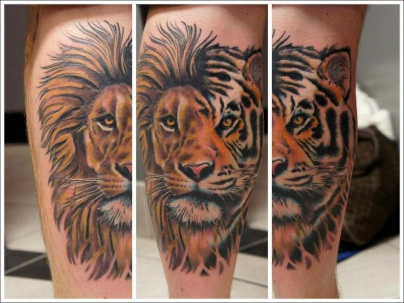 Half Lion Half Tiger Tattoo Google Search Fascinating
