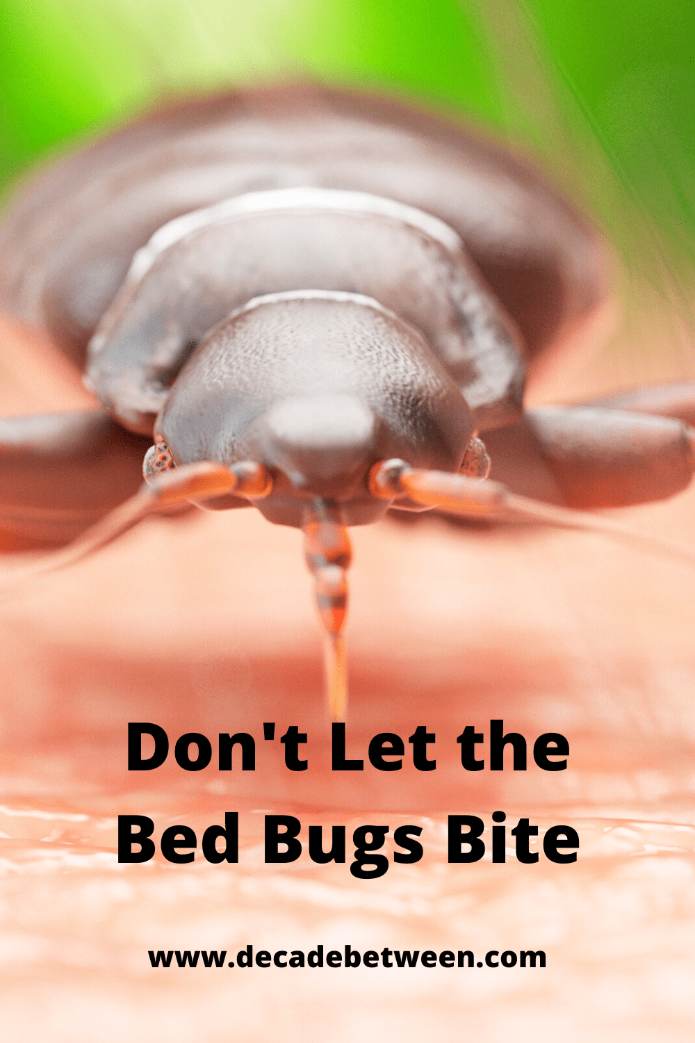Sleep Tight, Don't Let the Bed Bugs Bite in 2020 Bed