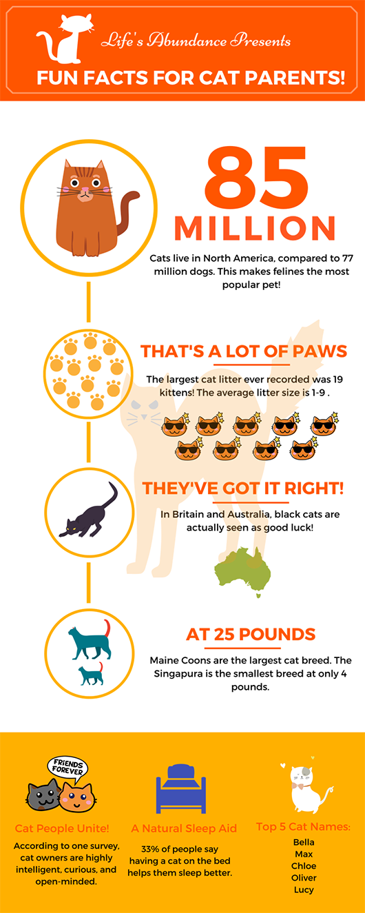 Infographic Fun Facts For Cat Parents Cat Parenting Fun Facts Cat Facts