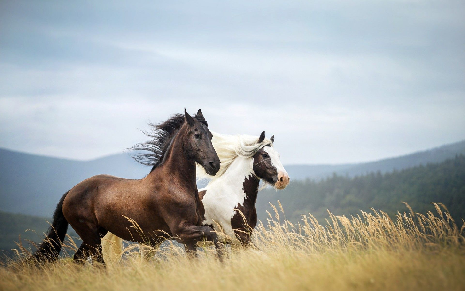 Amazing Wallpaper Horse Nature - ecf7c69a588b95bb0454ef92540c700f  Collection_46378.jpg
