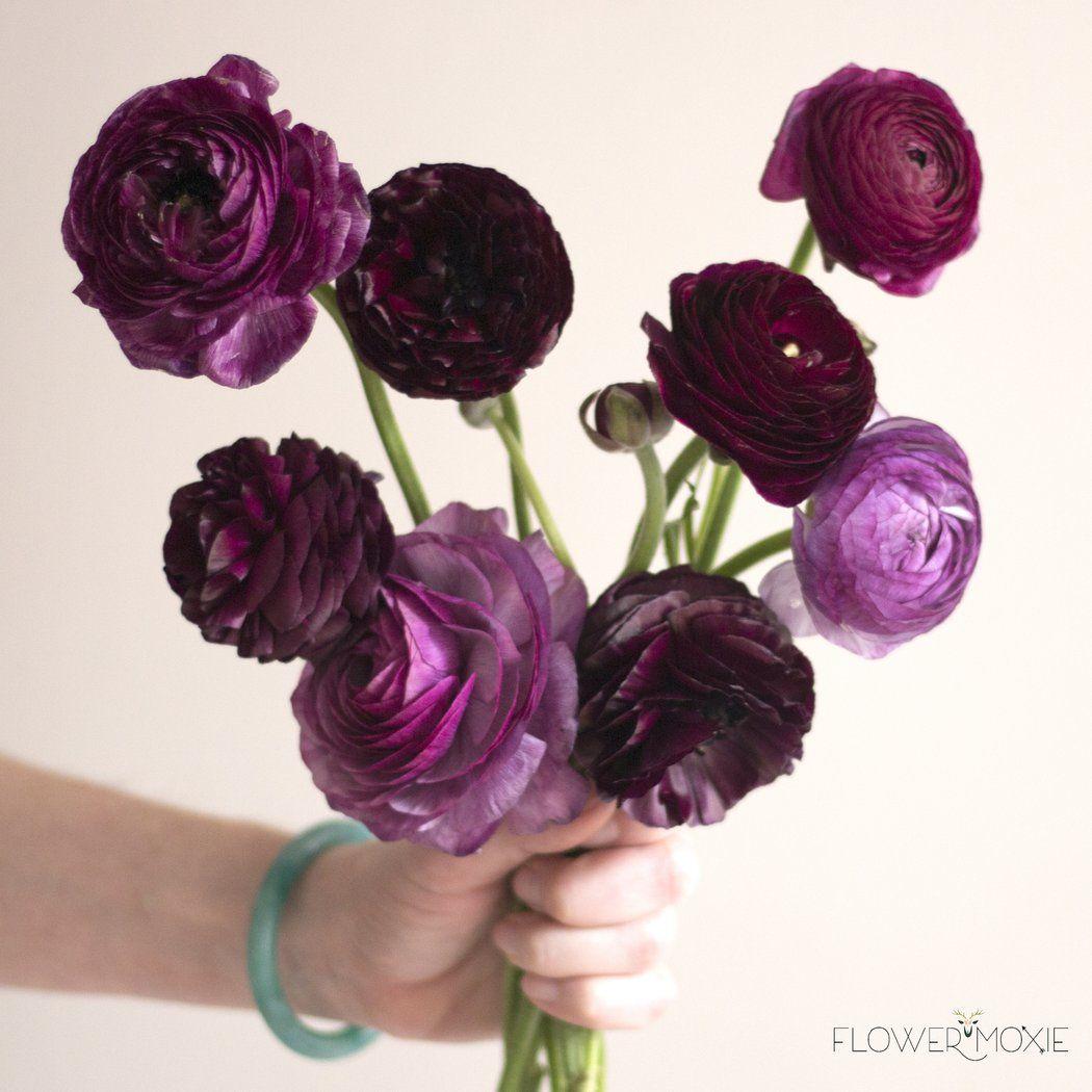 Purple Ranunculus Flowers Perennials Beautiful Flowers Garden Bulb Flowers