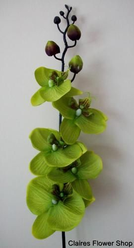 Lime green moth orchid silk flower stem artificial and this lime green moth orchid silk flower stem artificial and this color mightylinksfo Images