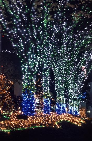 Photo Of Christmas Tree Street Lights Free Christmas Images Christmas Scenery Tucson Botanical Gardens Holiday Lights