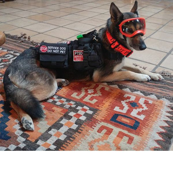 12 Struggles Of Life With A Service Dog Service Dogs Service
