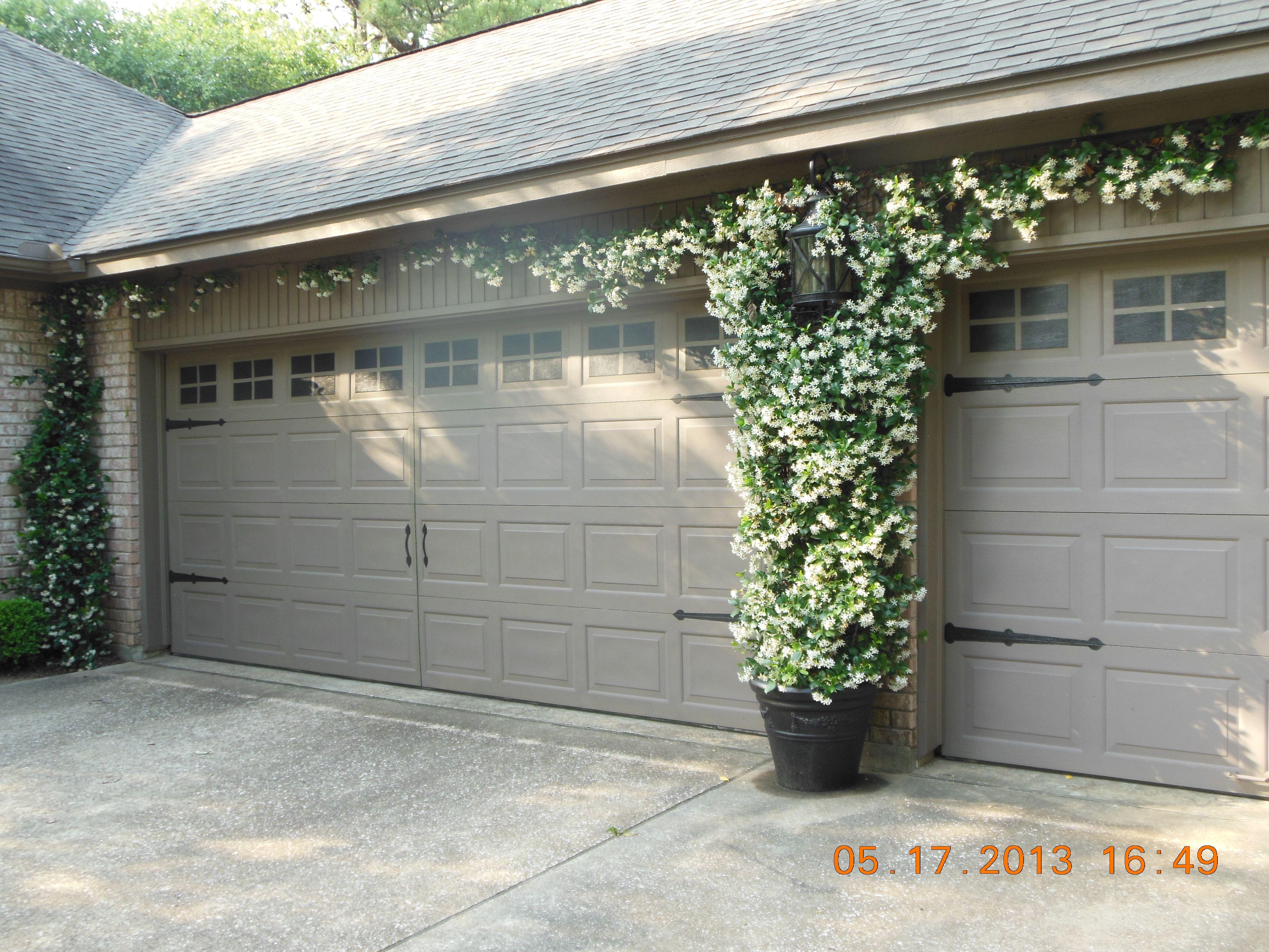 Confederate jasmine growing between garage doors for Garden garage designs