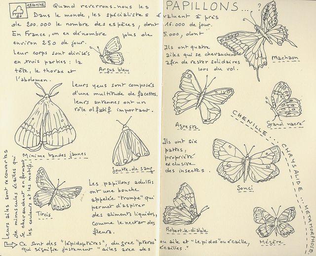 Sketchbook Aimez Vous Les Papillons C Butterfly Artist