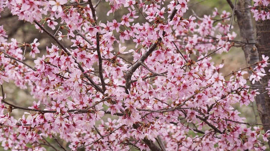 The Best Small Trees For Small Yards In The South Small Trees Trees To Plant Plants
