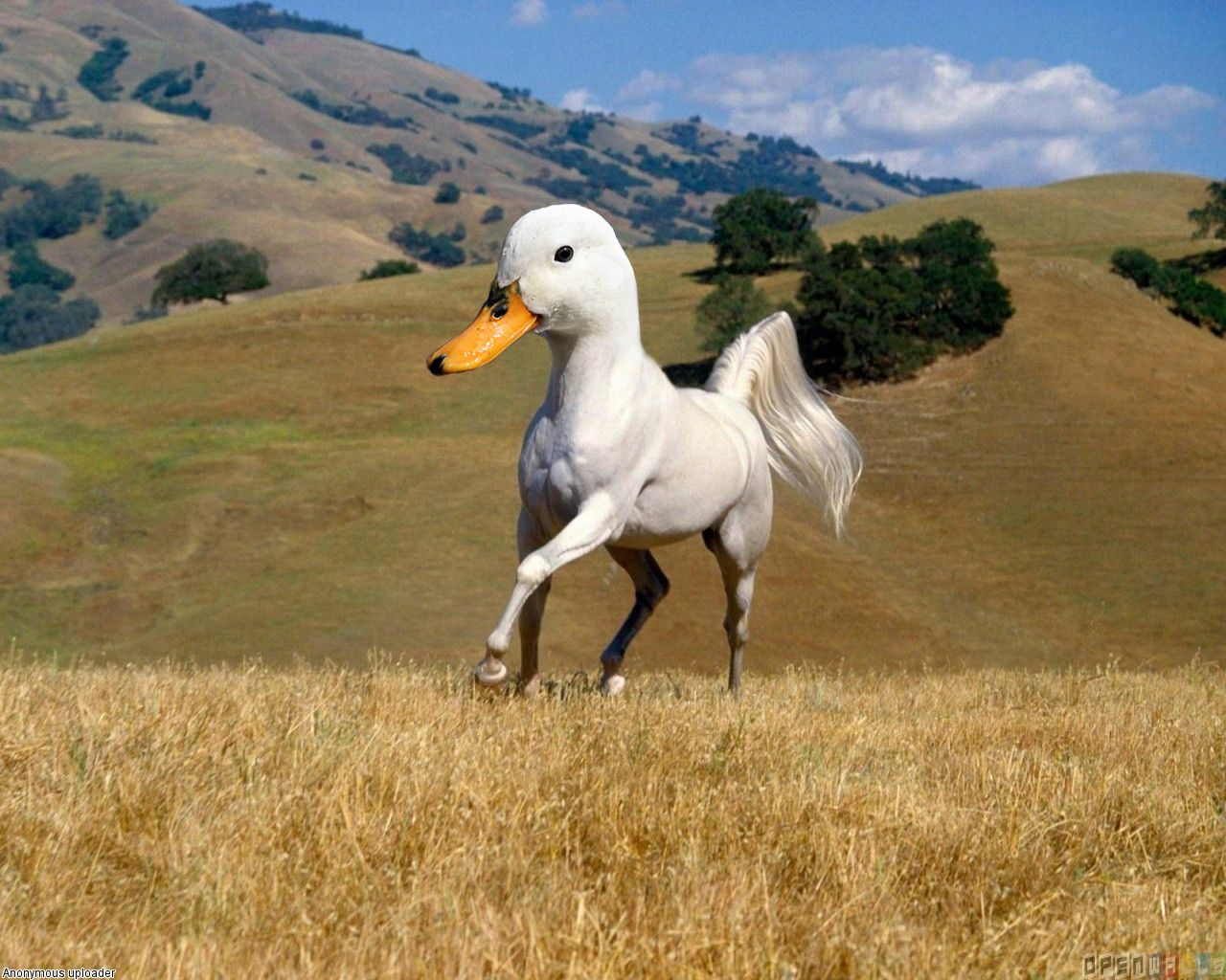 Weird Horse Pictures 11