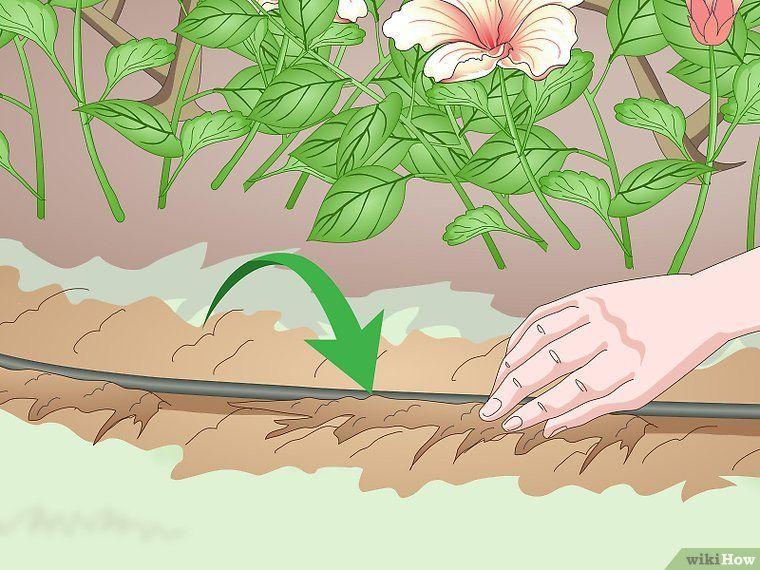 Install Plastic Lawn Edging Plastic Lawn Edging Lawn Edging Lawn