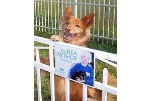 Bea Arthur Dog Park In Norfolk Va I Didn T Know She Was A Dog