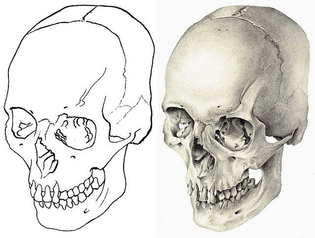 Skull Outline And Halftone Outlines Graphite And Drawings