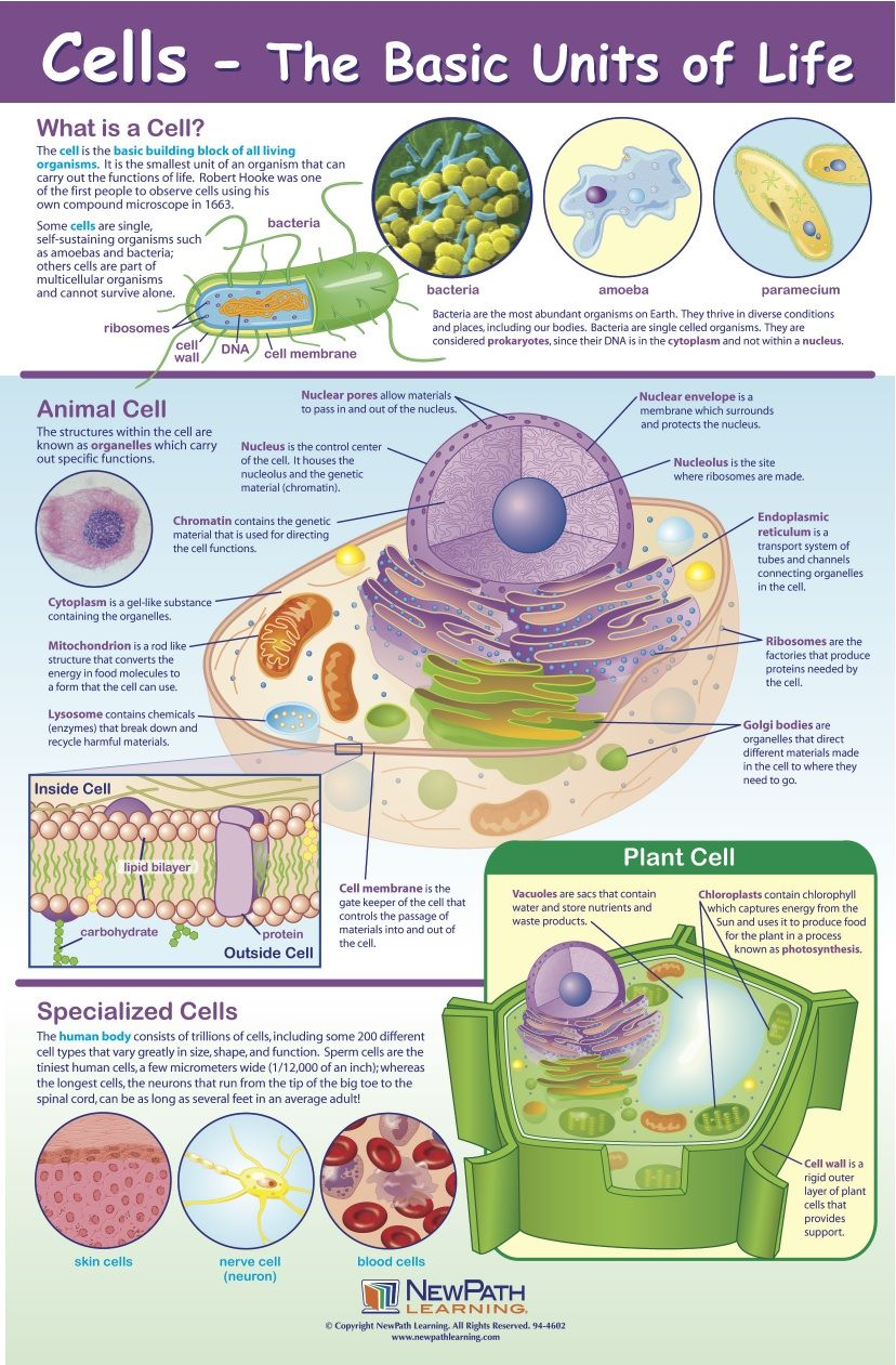 Cells Poster - PRINT for shelf work! : Micro in the ...