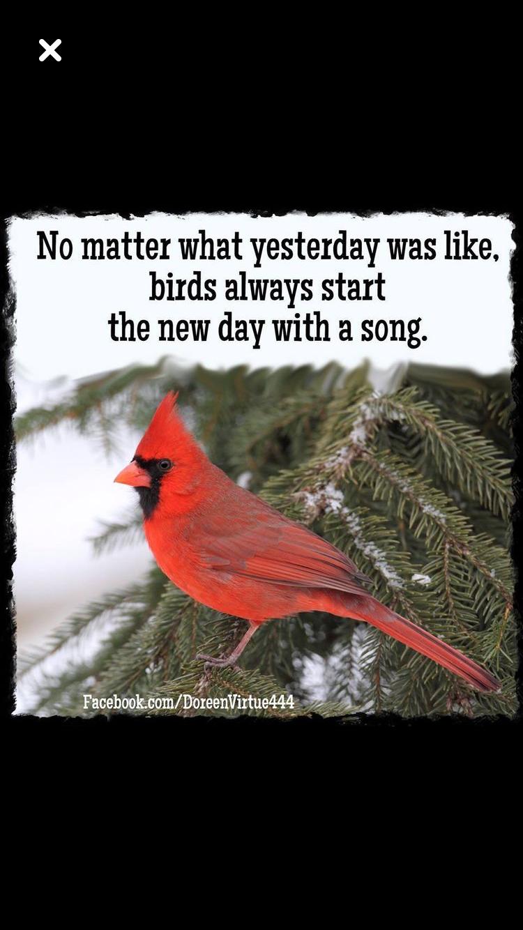 New day | God's Creations | Cardinal birds, Backyard birds