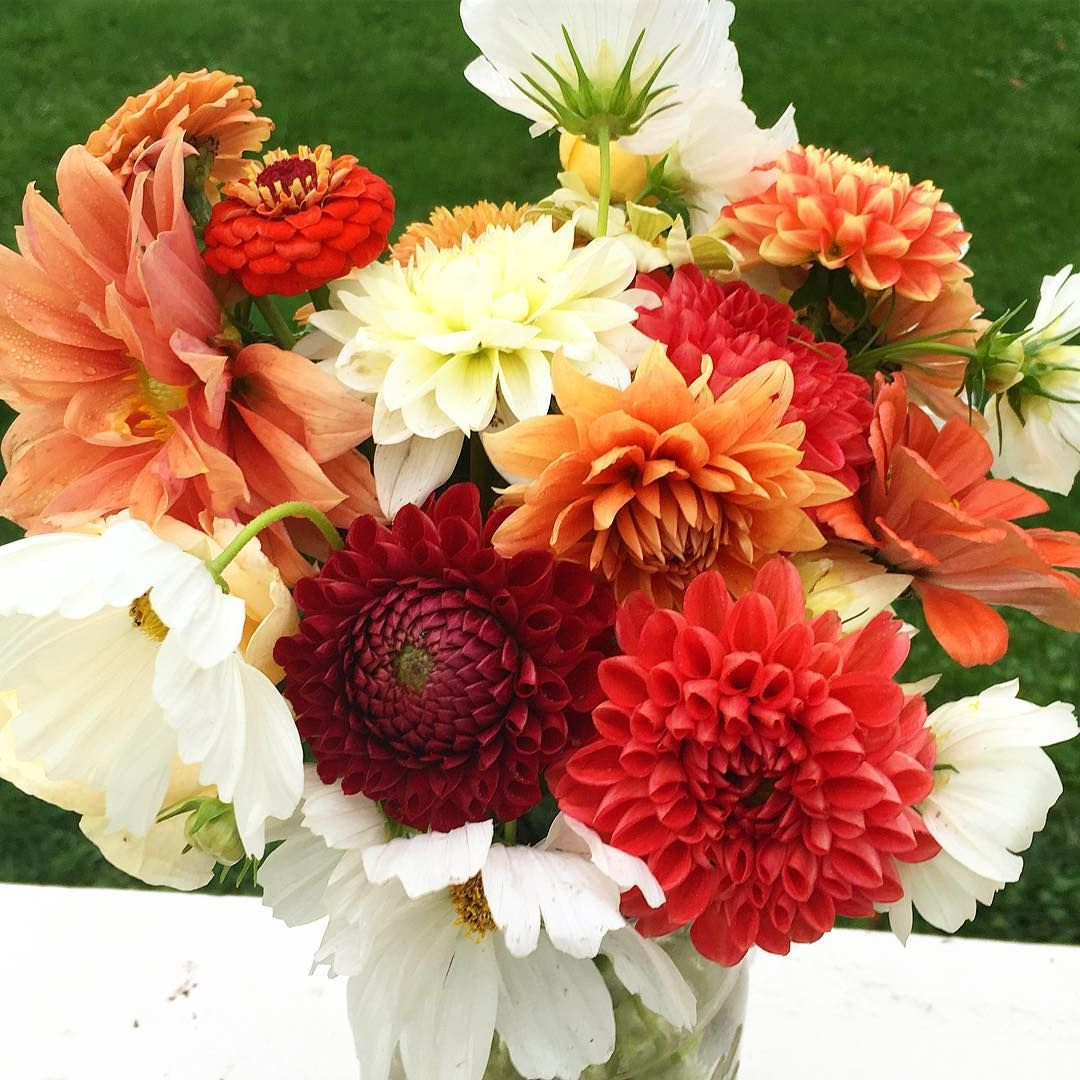 Have i mentioned lately that birthday flowers are my favorite have i mentioned lately that birthday flowers are my favorite farmerflorist flowerfarmer izmirmasajfo Choice Image