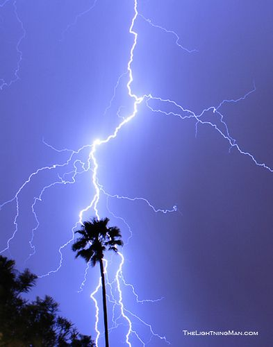 lightning strike tree | Recent Photos The Commons Getty Collection Galleries World Map App .. & Palm Tree on Strike | Lightning Lightning strikes and Palm