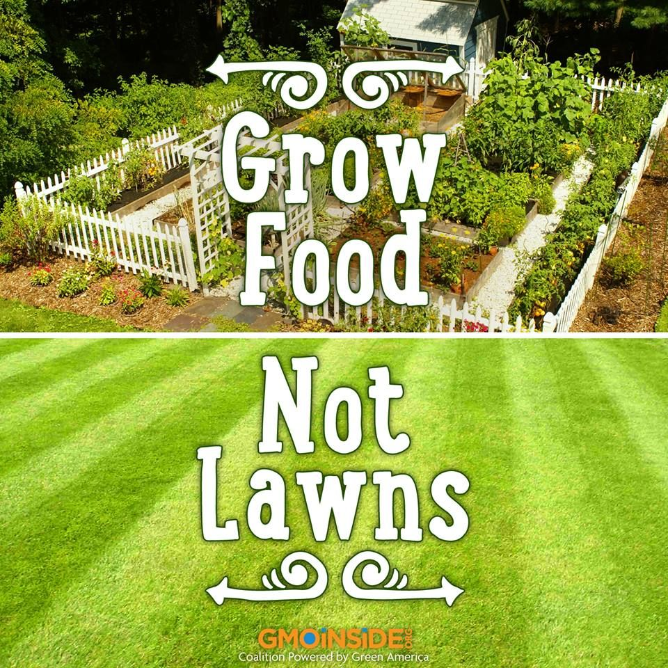 What should be a lawn in the country