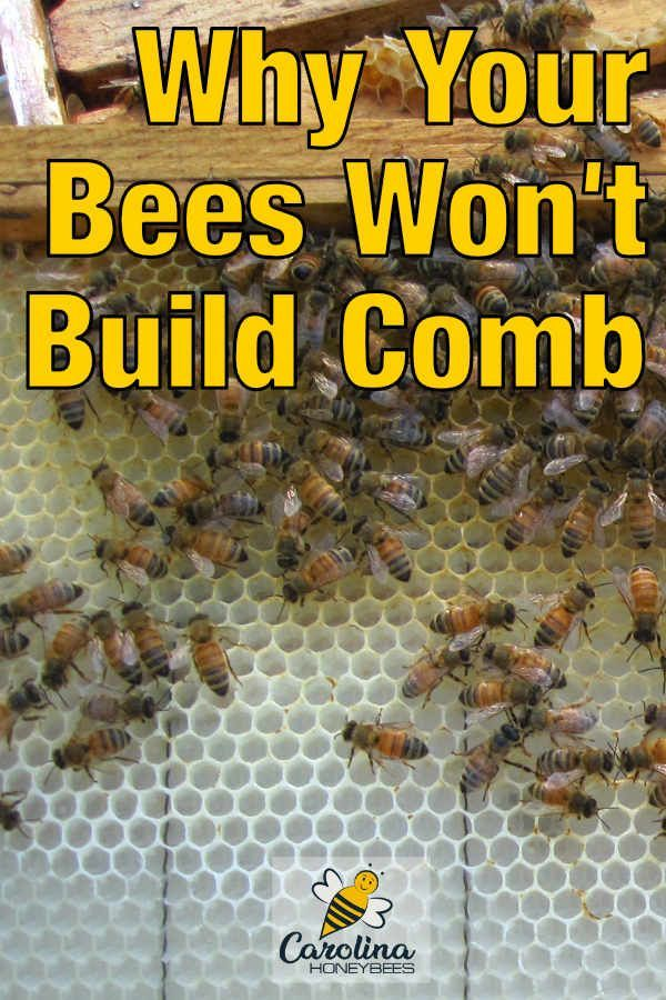 How To Get Your Bees To Build Comb Carolina Honeybees Bee Backyard Bee Honey Bee Hives