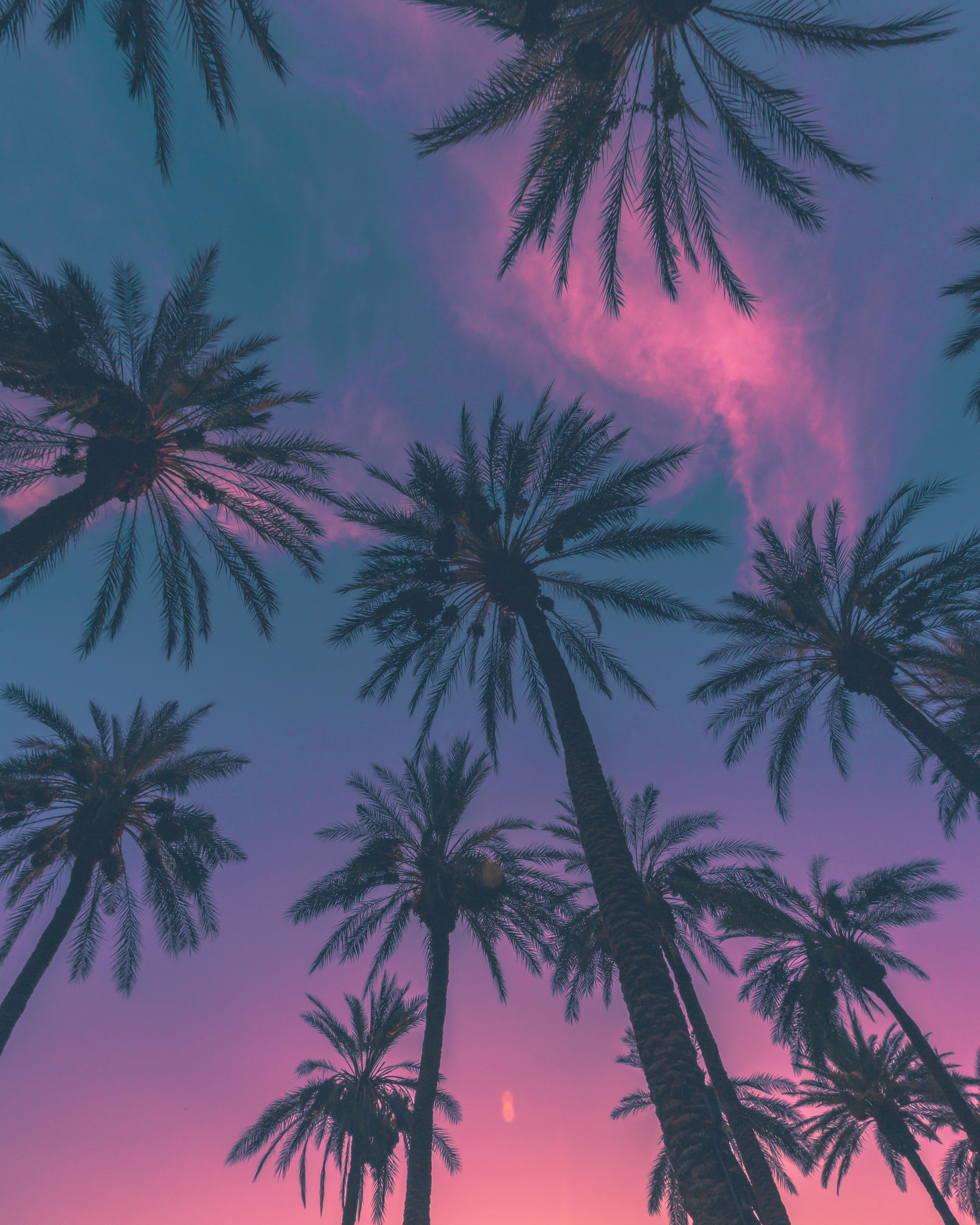 ITAP of Some Palm Trees | I reddit, i loved it | Palm tree