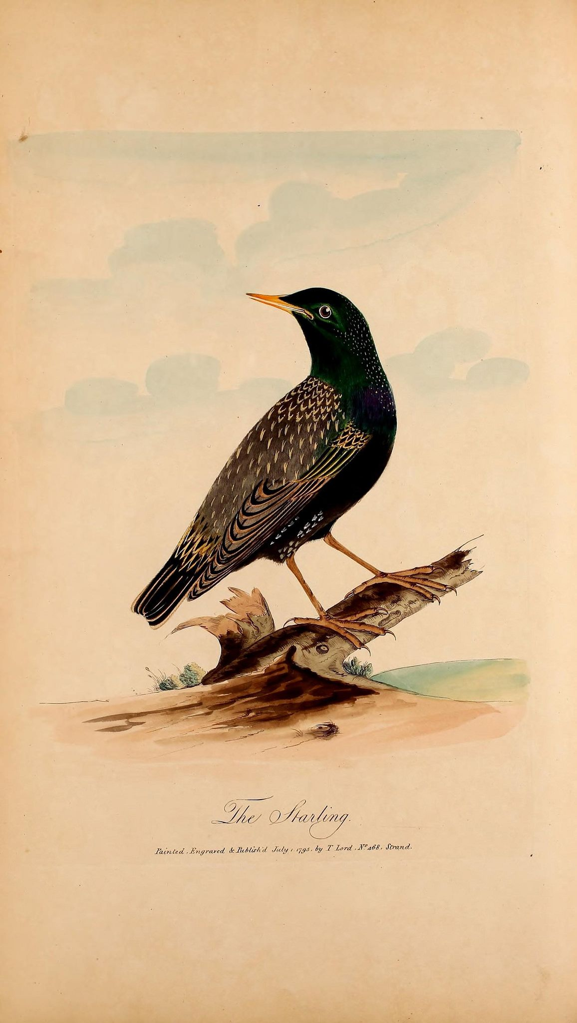 https://flic.kr/p/z4Sg1Z | n391_w1150 | Lord's Entire new system of ornithology, or, Oecumenical history of British birds ... /. [London] :pubd. May 14, 1791, by the author, no. 11, Maiden Lane, Covent Garden,[1791-1796]. biodiversitylibrary.org/page/48426208