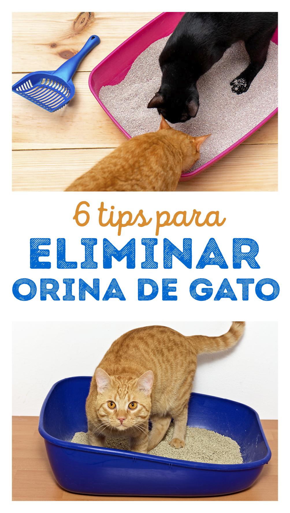 6 Tips Básicos Para Eliminar El Olor A Orina De Gato Cocina Vital Qué Cocinar Hoy Orina De Gato Areneros Para Gatos Eliminar Olor A Orina De Gato