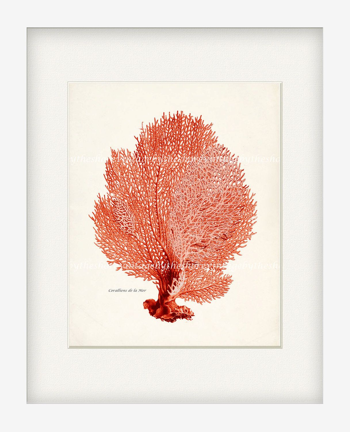 Love it vintage sea fan natural history sea coral wall decor vintage sea fan natural history sea coral wall decor print 8x10 bright coral amipublicfo Images