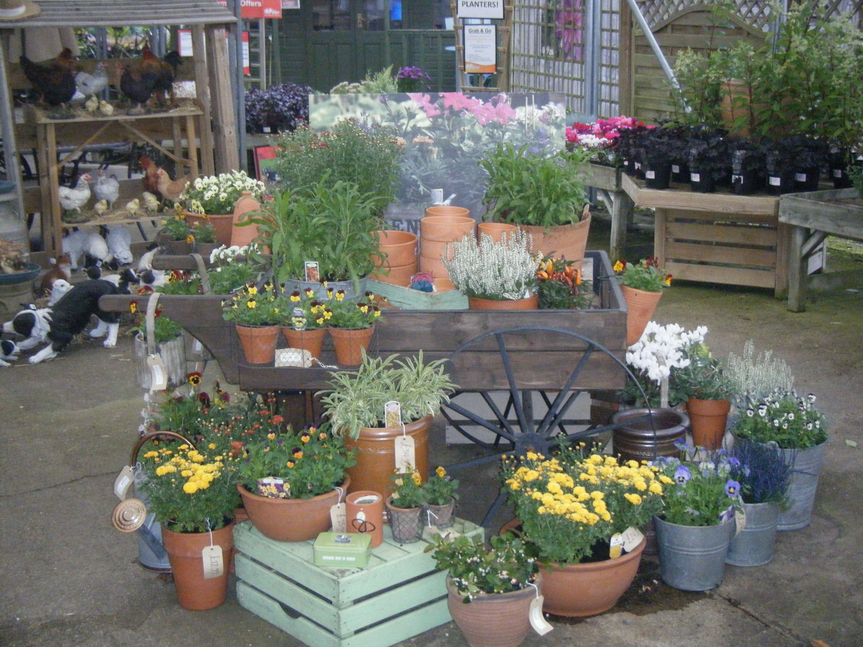 Hillier Garden Centre Autumn Container Displays 2013 Garden Center Displays Display Ideas Nursery Garden Store