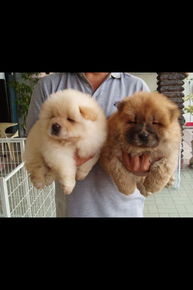Fluffy Pups Cute Animals Baby Animals Cute Dogs