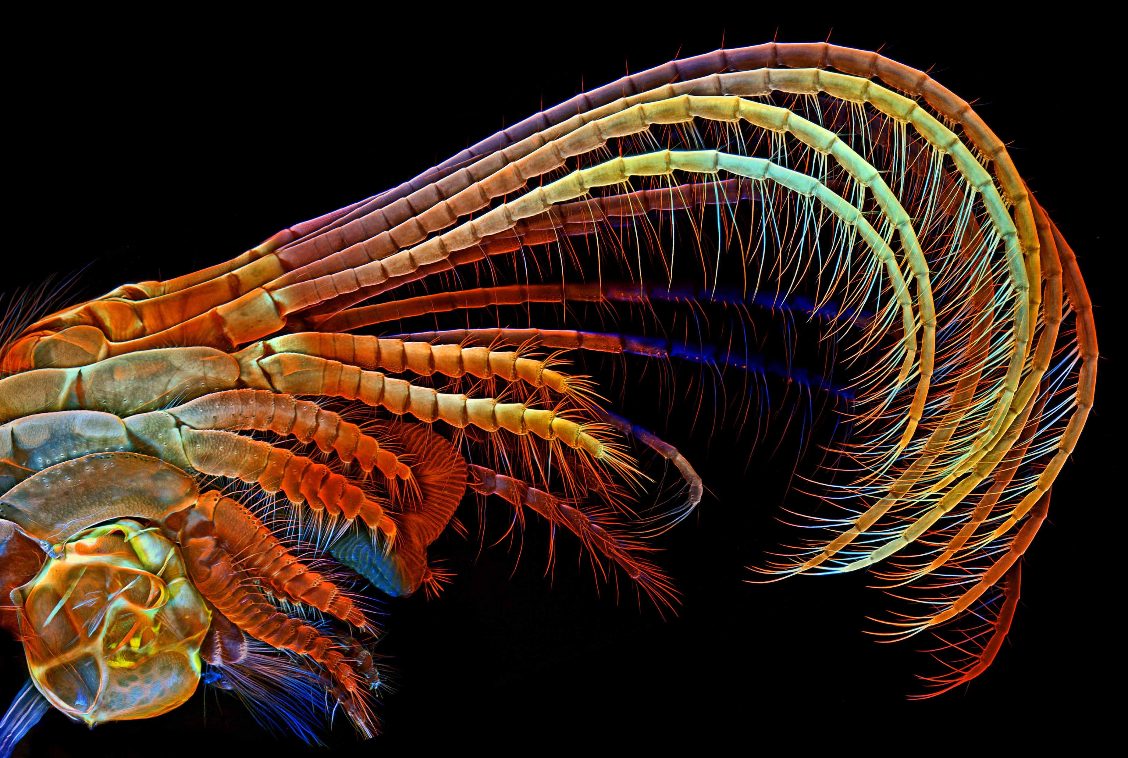 10 Award-Winning Microscope Images That Blur Science and Art