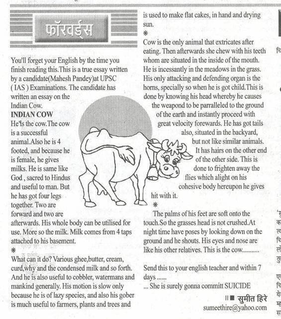 term paper softwaer Buy an essay Pinterest Term paper - best of letter format in marathi language
