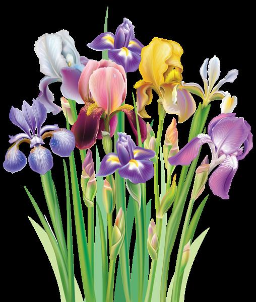Irises Png Clipart Image Flower Art Iris Flowers Digital Flowers