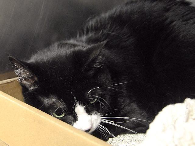 (20) Brenda P. Williamson (BrendaPerrott) Twitter Cat