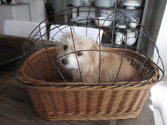 Vintage British wicker bicycle basket for carrying a little dog. Very sturdy with supports for hanging on the bicycles handle bars and a wire section