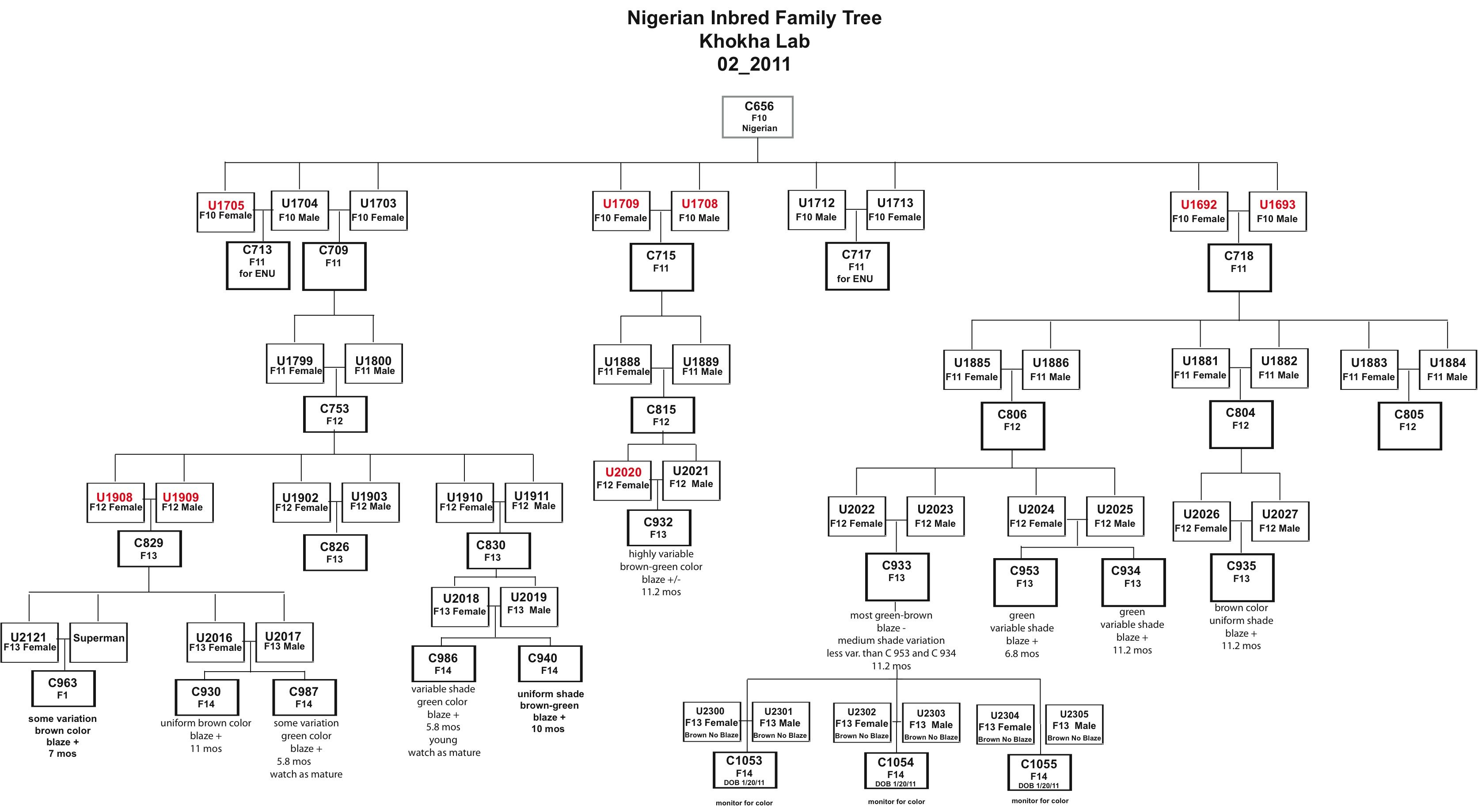 Genetic Family Tree Template
