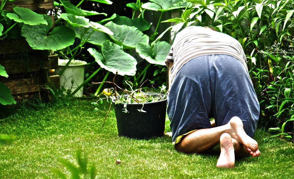 Unkraut Entfernen Unkraut Im Garten Unkraut Entfernen Und Unkraut